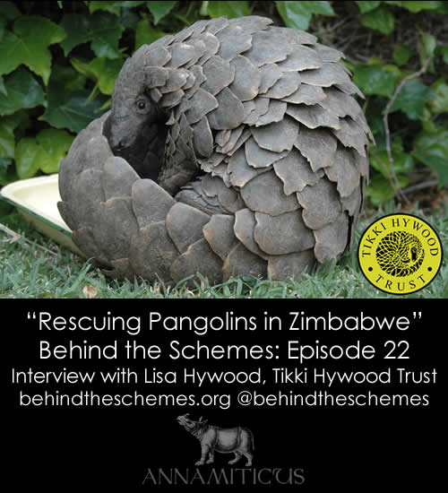 "Behind the Schemes Episode 22: ""Rescuing Pangolins in Zimbabwe"""