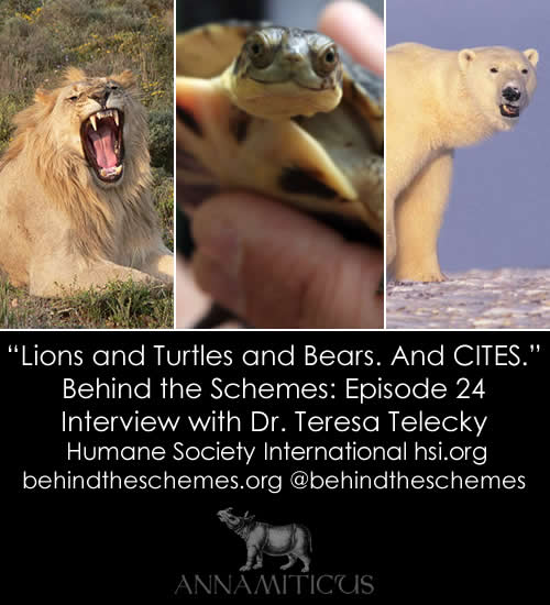 In Episode 24, we're talking about lions, turtles, bears, elephants, rhinos and CITES with Dr. Teresa Telecky from Humane Society International.