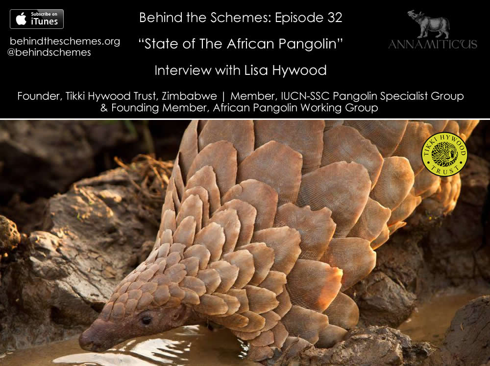 In Episode 31, we're talking about the state of the African pangolin.