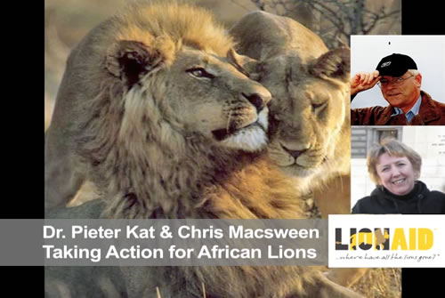 Behind the Schemes: Taking Action for African Lions